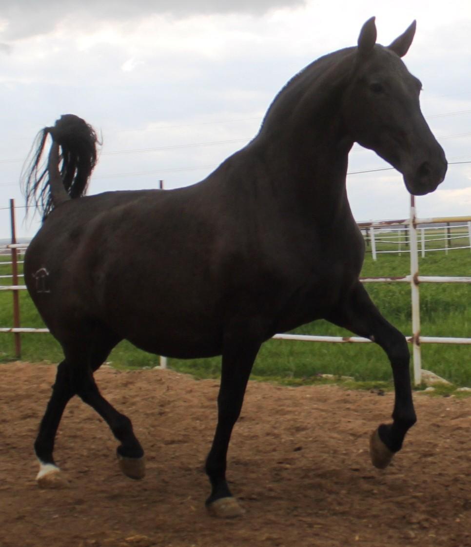Yeguada Llorente